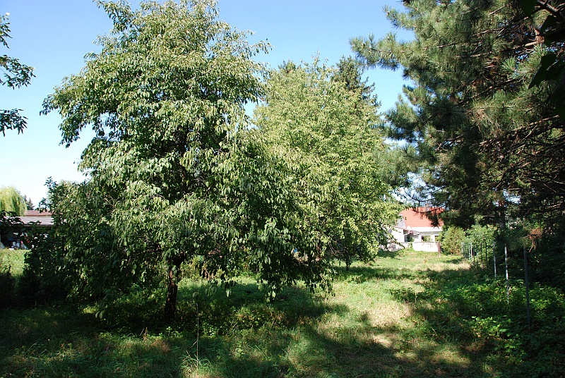 Dobrý pozemok je v zástavbe a na záhrade má aj vzrastlé stromy